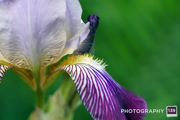 Photo of the Day 0030 - June 1, 2014