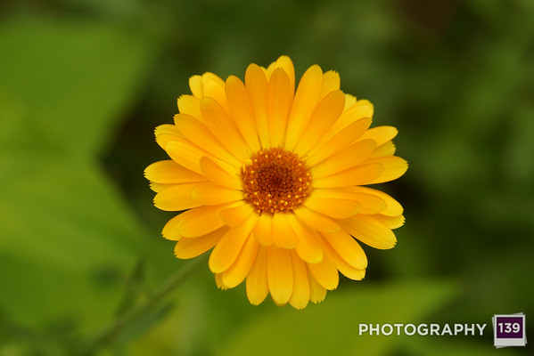 Photo of the Day 0120 - August 30, 2014