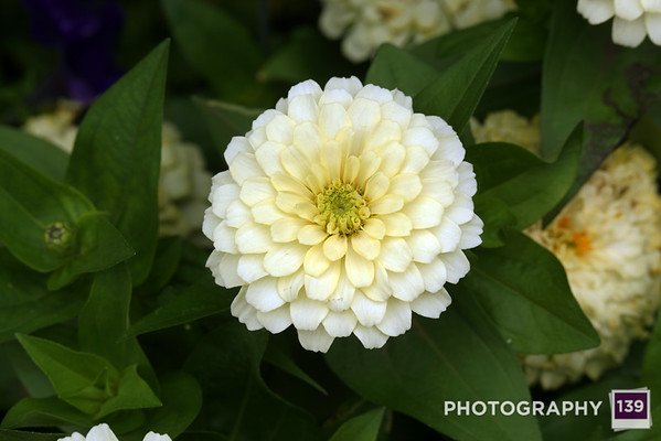 Photo of the Day 0124 - September 3, 2014