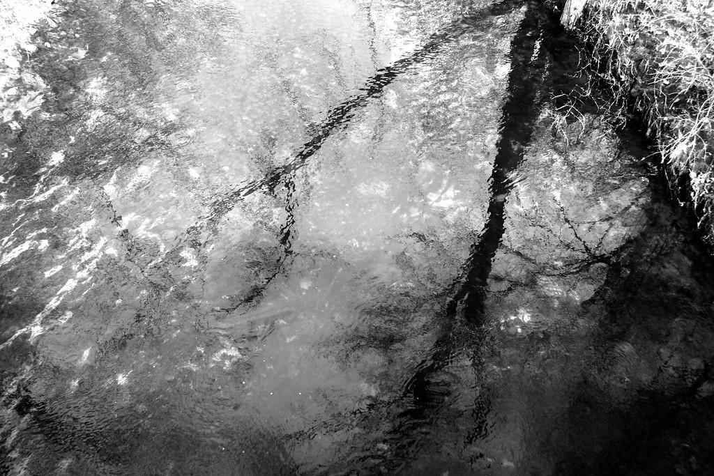 TREE - LOSER