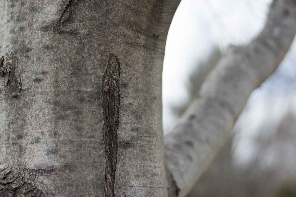 WEEK 26 - TREE - ANGIE DEWAARD 1