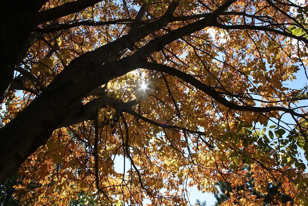 WEEK 26 - TREE = BILL WENTWORTH